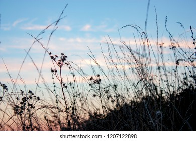 Grass in the meadow in the early morning - natural summer scene. Dry grass in the field at dawn. Silhouette of plants against the background of dawn. Close-up.