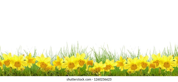 grass meadow flowers bells daffodils spring flowers daisies
