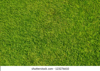 Grass meadows top view.