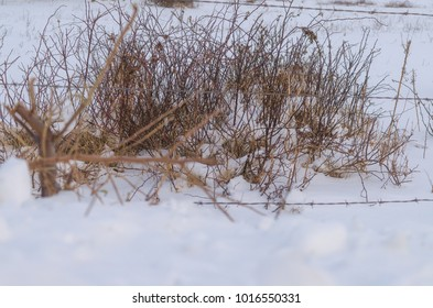 Grass in middle of snow