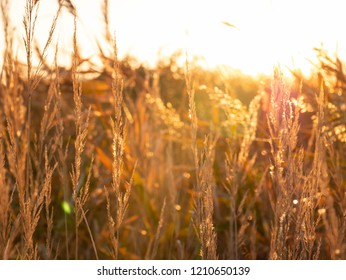 The grass in the morning