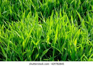 Grass and morning sunlight/ background