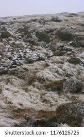 Grass, moss, rocks and stones in a snowy, foggy landscape.