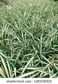 Grass. Natural background.
