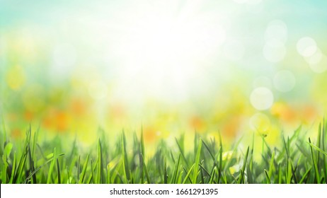 grass with natural bokeh spring flowers blossom background, sunny sky