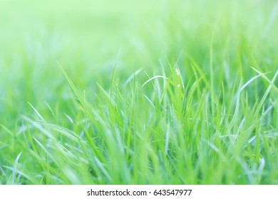 grass on background