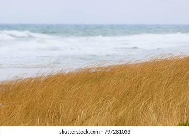 Grass on the beach
