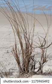 Grass on a beach at Lacanau, western France.