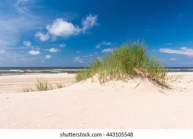 Grass on beach under blue skies