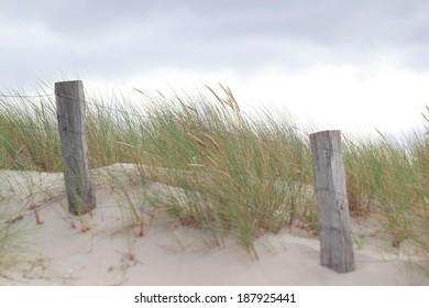 grass on coastal dune