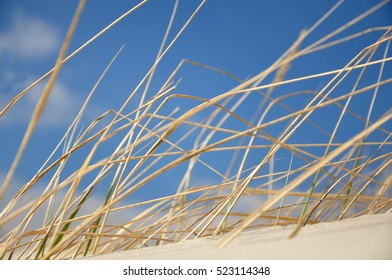 Grass on a dune at the beach with blue sky