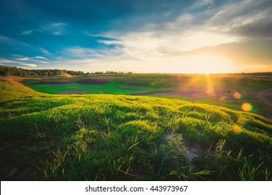 Grass on the field during sunrise