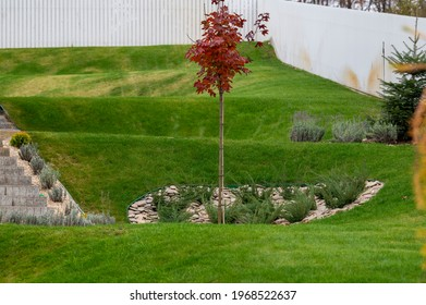 grass on the lawn with a flower bed of stones and juniper from evergreen boxwood bushes in landscape design