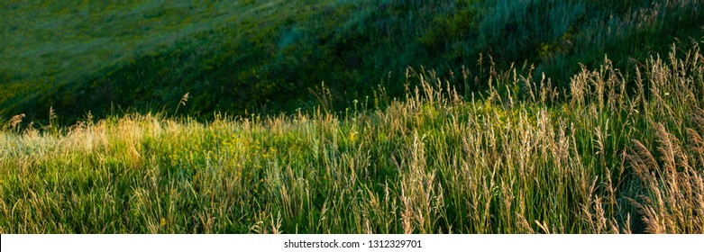 grass on a meadow in the evening in hilly terrain. Spring season. Web banner.