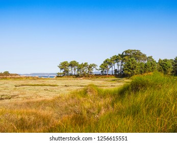 Grass on Salinas marsh in Arousa Island with pine tree forest on the edge