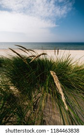 Grass on the sandy and windy Baltic seashore