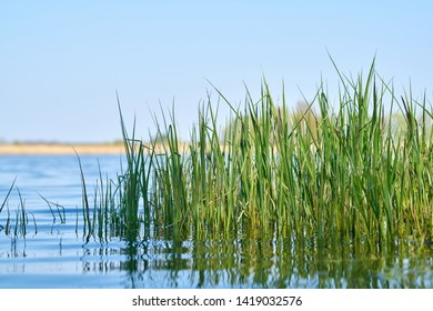 Grass on the shore of a lake in a nature reserve near Magdeburg in Germany