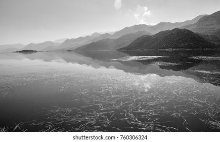 Grass on the surface of the water with reflections of the mountains