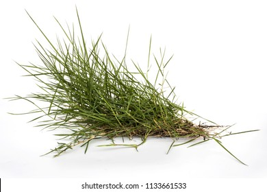 Grass on a white background