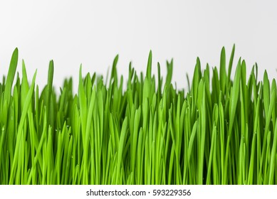 Grass on a white background.
