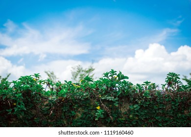 Grass and ornamental trees and sky gardening background