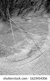 Grass painting circles in sand