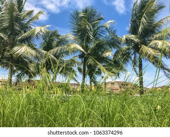 Grass and palm trees on the streets of Vietnam. Sunny day and beautiful view