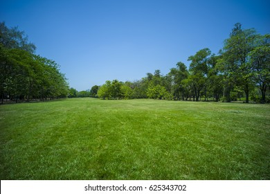grass in park