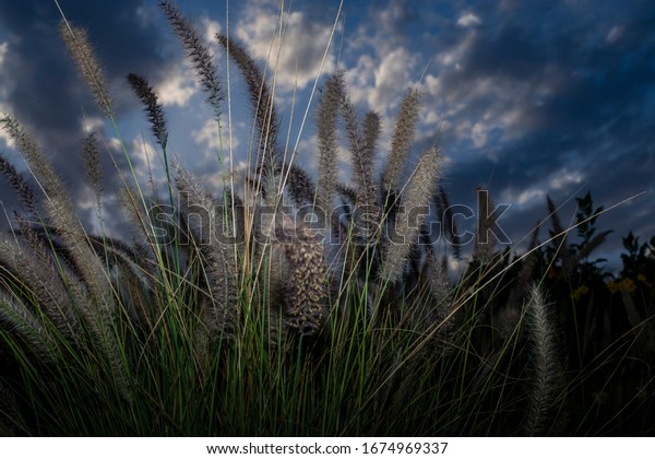 grass in the park with dramatic light in the sky
