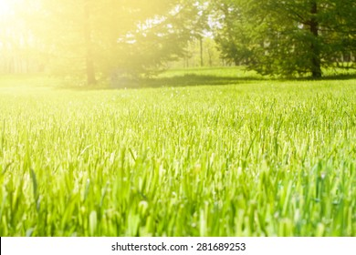 the grass in the park . trees in the background