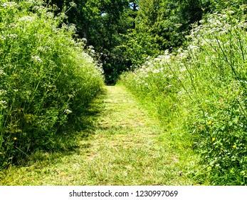A grass path through tall plants / weeds
