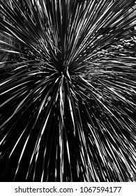 Grass photo done in high contrast black and white has a fireworks feel