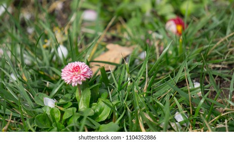 grass with a pink flower sprouting on the ground