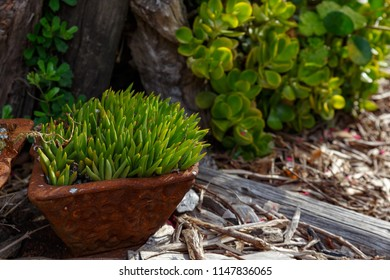 Grass plant growing in a pot in the garden