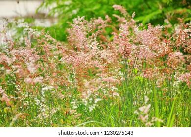 grass pollen with green background