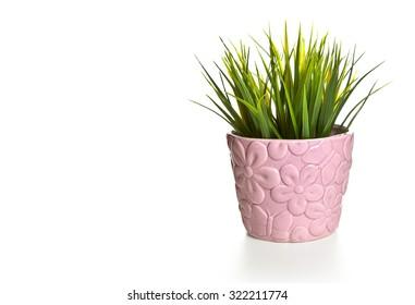 Grass in the pot, Flower in a pot