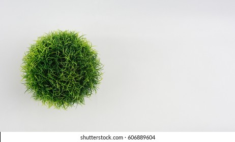 Grass in the pot isolated on white background. Top view  flat lay.