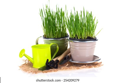 Grass in pots and garden tools isolated on white  background. Gardening concept.