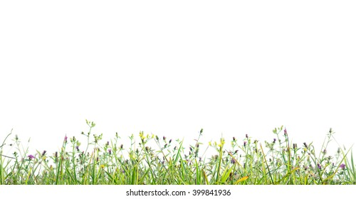 grass profile isolated