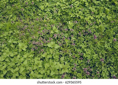 Grass with purple flowers