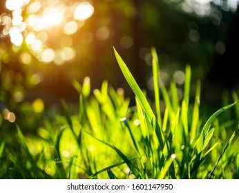 Grass regenerate in the garden with bokeh and sunlight on blur background.
