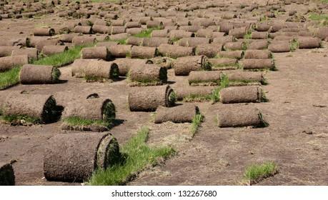 grass rolls