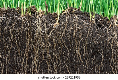 grass with roots and soil