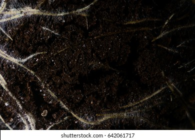 Grass roots in soil, close-up