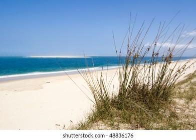 grass in sand dunes in front of the ocean
