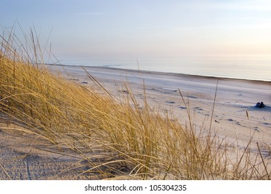 grass in sand dunes in front of the sea, evening time