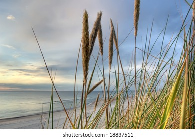 grass in sand dunes in front of the sea