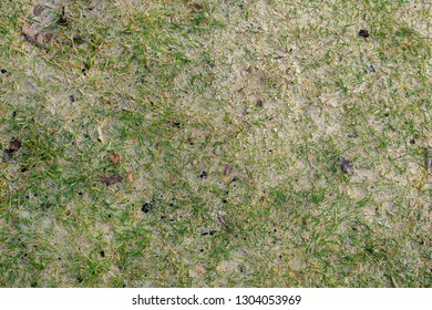 Grass , sand and leaves background texture