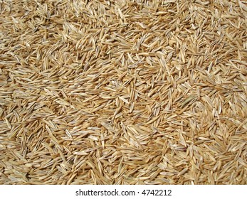 Grass seed background.