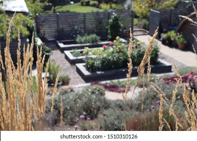 Grass seed heads in front of a background of an immaculately manicured garden with raised beds